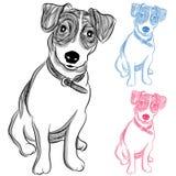 Irlandese Jack Russell Terrier Dog Fotografie Stock