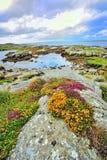 Irlandia krajobraz Obraz Stock