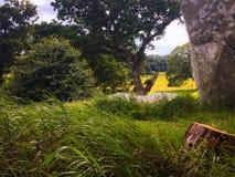 Irlandia Pólnocna, Winterfell - obraz stock