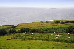 Irlandia zielona wyspa. Obraz Stock