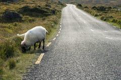 irlandzka droga Zdjęcia Stock
