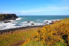 Irlandzka linia brzegowa Zdjęcia Stock