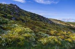 Irlandzki wzgórze z kwiatami Zdjęcia Stock