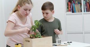 Irmão novo e irmã que plantam plantas em uma caixa de madeira que arranja com cuidado o solo em torno da planta frondosa verde - vídeos de arquivo