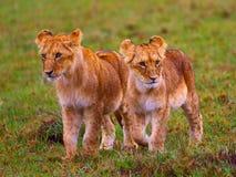 2 irmãos Fotografia de Stock Royalty Free