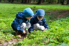 Irmãos gêmeos no prado Fotografia de Stock Royalty Free