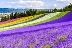 Irodori field, Tomita farm, Furano, Japan. It is the famous and beautiful flower fields in Hokkaido Stock Photo