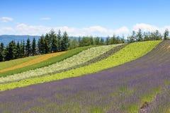 Irodori field of Tomita farm in Furano, Japan, Hokkaido Royalty Free Stock Photography