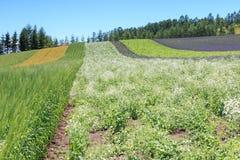 Irodori field of Tomita farm in Furano, Japan, Hokkaido Royalty Free Stock Images