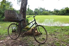 Iron bike in the paddy fields stock images