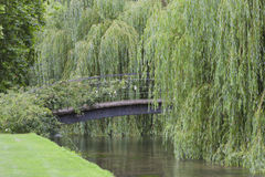 Iron bridge over river under weeping willow, summertime day . Royalty Free Stock Photo
