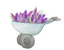 Iron cart with flowers on a white background royalty free illustration