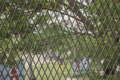 iron chain link fence against the green garden. Soft selective  Royalty Free Stock Photo