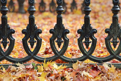Iron Fence and Autumn Leaves. Iron fence detail and autumn leaves on ground Royalty Free Stock Images