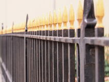 Iron fence black with golden tips Royalty Free Stock Photo