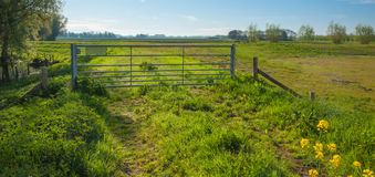 Iron fence in a Dutch rural landscape Stock Photography