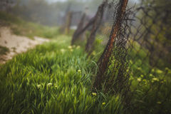 Iron fence in the grass Stock Images