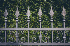Iron fence with green leaves background Royalty Free Stock Photo