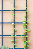 An iron fence on top with an ivy Royalty Free Stock Image