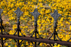 Iron Finials. Ornate old iron finials decorate a grave in New Mexico, with yellow flowers growing wild in the turn-of-the-century graveyard Stock Image