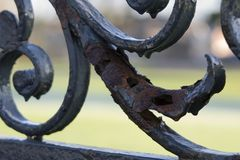 Iron gate. Wrought iron gate Stock Image