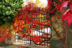 Iron gate and red leaves Royalty Free Stock Images