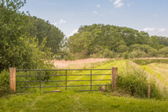 Iron gate in a rural landscape Stock Photo