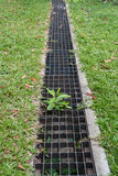Iron grate of water drain in grass garden. Field royalty free stock photo