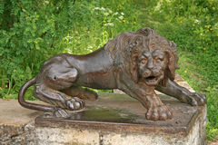Iron lion at the large stone stairs in the Pavlovsk palace park. Russia Stock Photos
