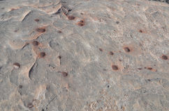 Iron Marble Rock Background. Sandstone pockmarked with iron marbles, deposits of iron oxide that American Indians used as marbles Royalty Free Stock Photography
