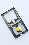 Iron mouse trap bait by corn seed on white background Royalty Free Stock Images