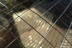 Iron net Royalty Free Stock Images