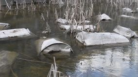 Iron old radioactive barrels lie in the river and pollute the environment