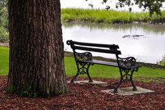 Iron park bench under a tree next to a lake Stock Images