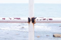 Iron railing at the house by the sea is corrosive.  royalty free stock image