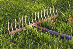 Iron rake Stock Image