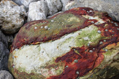 Iron-rich ferrous boulder. Ferrous boulder with iron-rich red layers and limpet. Cape Espichel, Sesimbra, Portugal Royalty Free Stock Photography