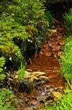 Iron saturated creek in a mining area Royalty Free Stock Photo