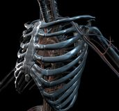 Iron Skeleton. Metall Skeleton in 3D. Computer Graphic Royalty Free Stock Photography