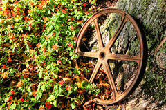 Iron Wagon Wheel Royalty Free Stock Image