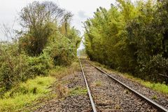 Iron ways. The iron line and the bamboos, this part of the railway line is in the region of Torrinha SP Brazil. landscape of the railway line stock photo