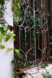 Iron Window with Vines Stock Image
