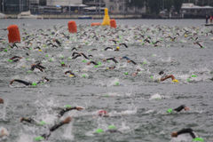 Ironman瑞士游泳2014年 免版税库存照片