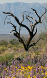Ironwood tree and flowers Stock Images