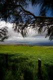 Ironwood and wired fences on Kohala Mountain Road, Waimea Stock Photo