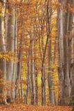 Ironwoodwald stockbilder