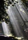 irradia gli alberi del sole di primo mattino Fotografia Stock Libera da Diritti