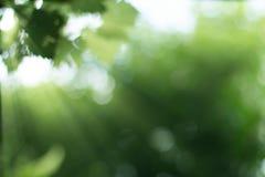Irradia o nascer do sol com fundo borrado da planta verde Fotos de Stock Royalty Free