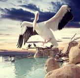 Irrealny krajobraz i ptaki Zdjęcie Royalty Free