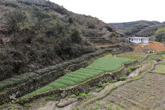 Irregular farmland. In dingcuncun village, tong'an district, xiamen city, china. mountain land is scarce irregular Royalty Free Stock Photos